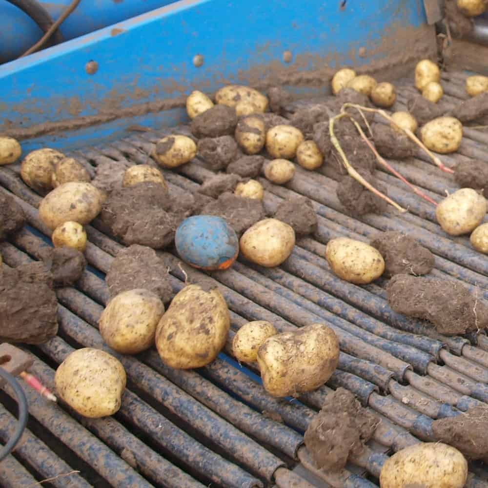 tuberlog electronic potato can withstand the harsh environment of a harvester