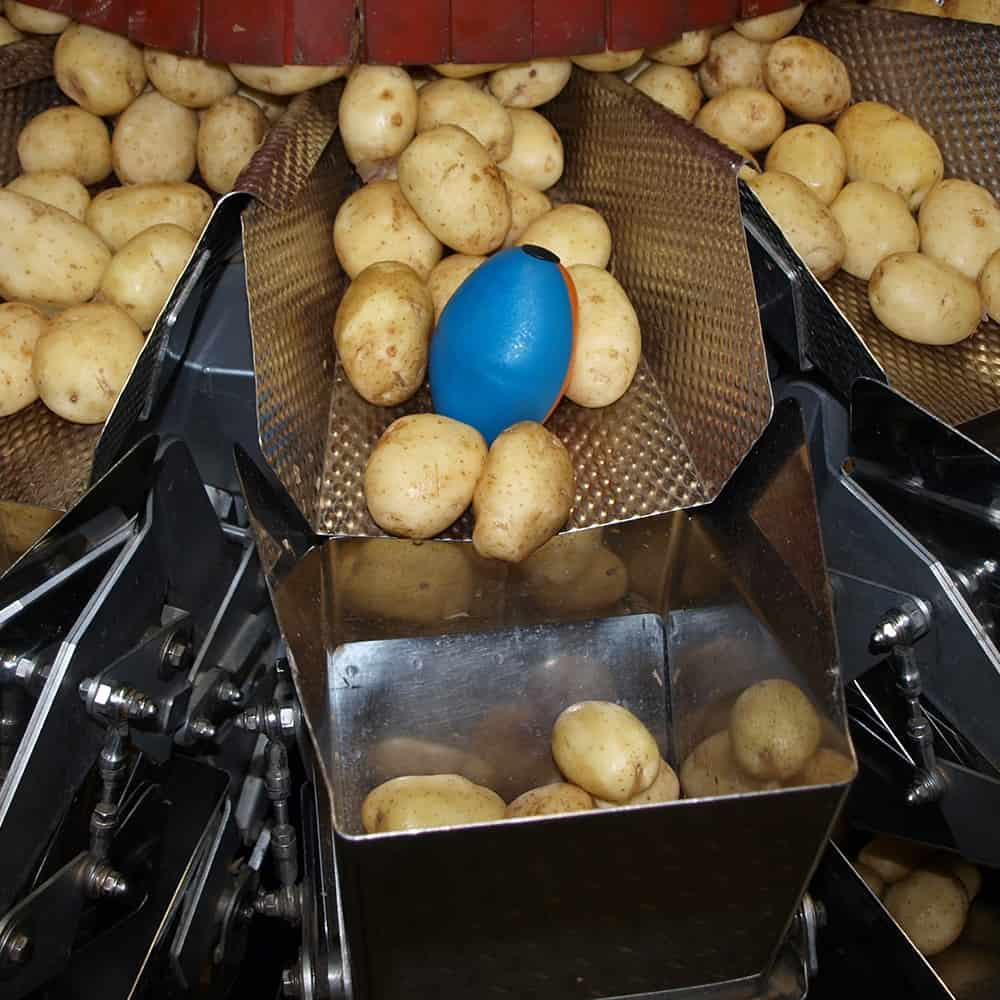 tuberlog electronic potato on the packing line